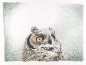 "Great Horned Owl Chick 10.5""x13"""