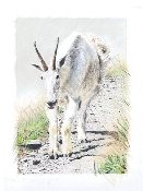"Rocky Mountain Goat 9""x13"""